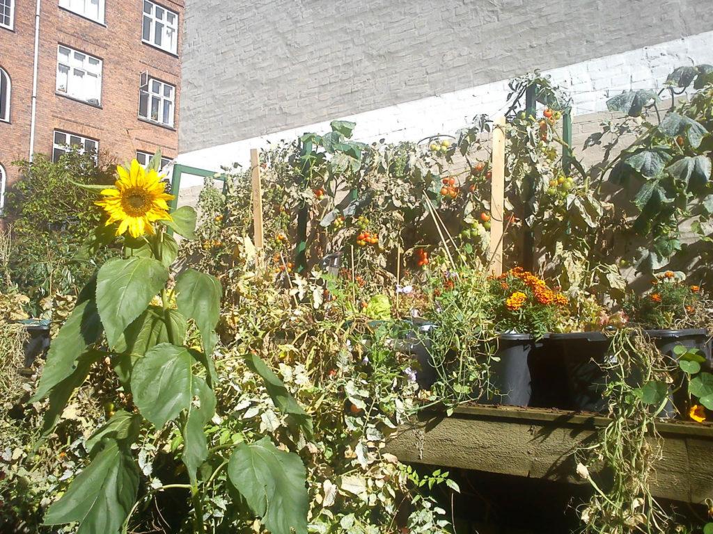 Artikel om TagTomater og seks gode råd til etablering af planteprojekt