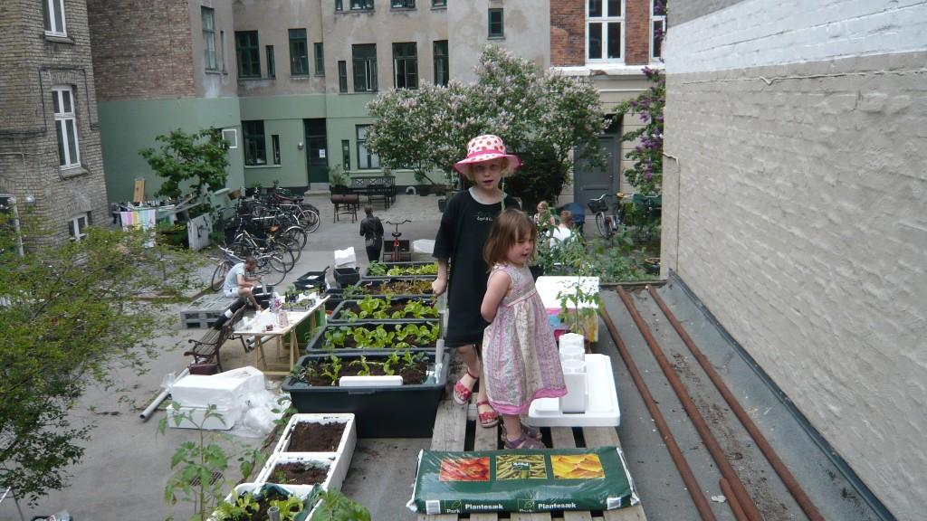 Ronja og Solbjørk laver taghave