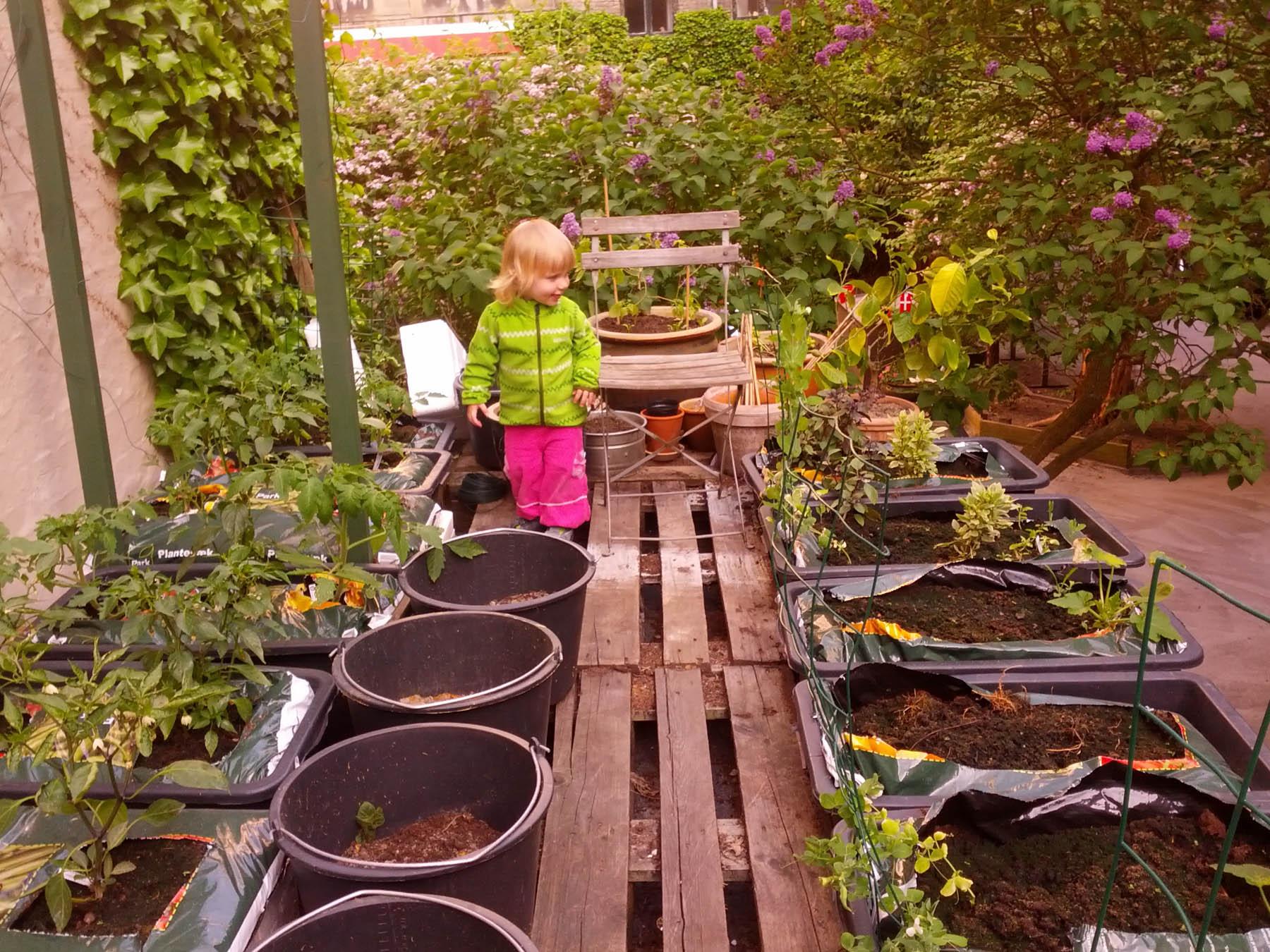 Udplantning af bønner og måske et par meloner lørdag den 8. juni kl. 13-15:30