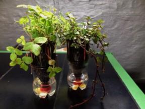 Pant-Plante-Workshop_TagTomat_2014-05-30