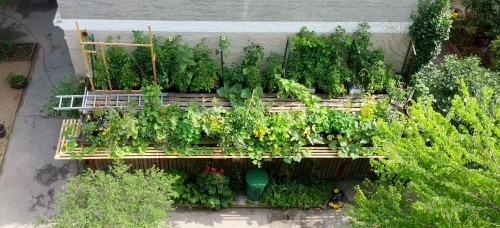 Frø à la TagTomat – så-kalender og valg af frø