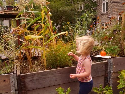 Frøhøst med Siri IMG_20130908_163733