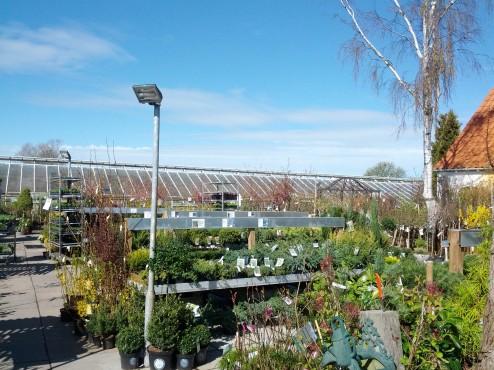 Indkøb af planter hos Amager Planteland IMG_20140415_111818