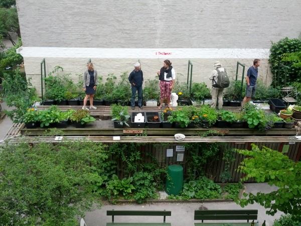 Bybonde laver baggårde om til grønne gårdhaver