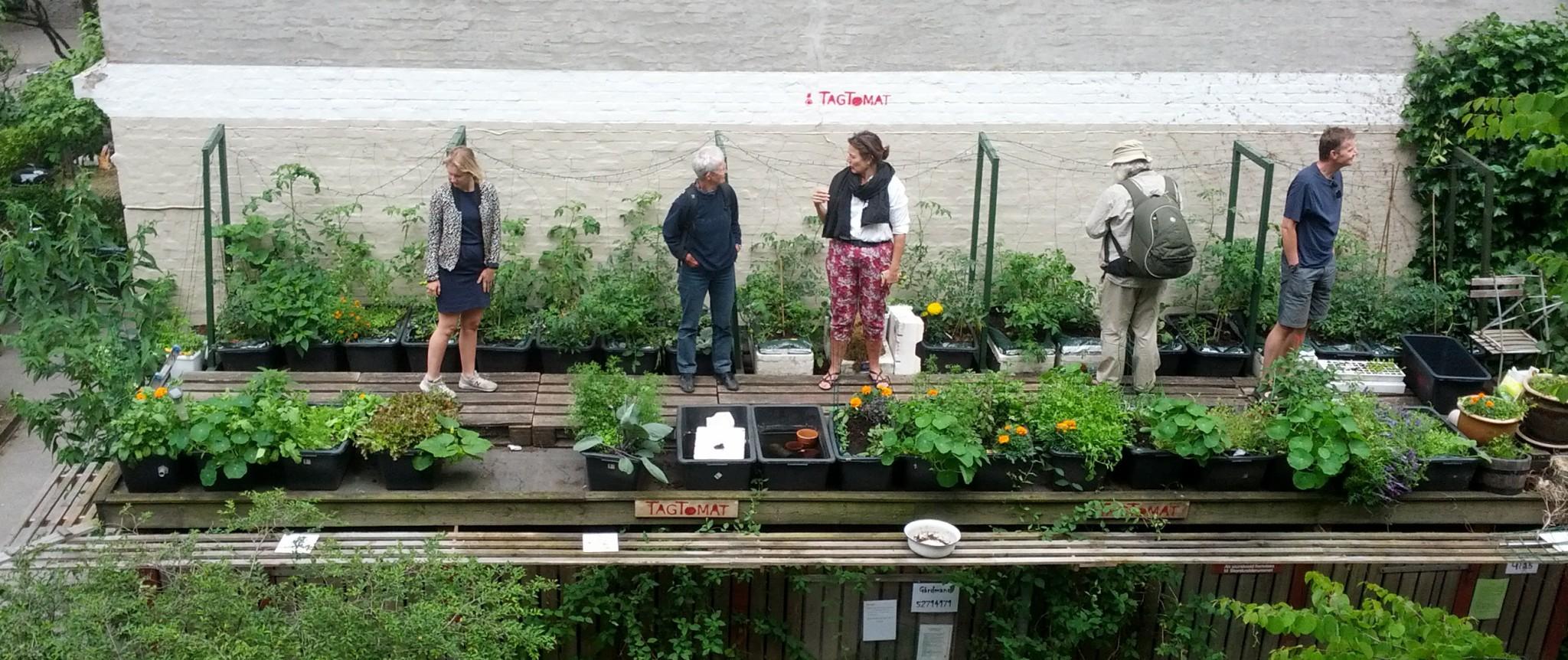 Taghaven på Nørrebro