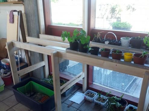 Planterne voksede sig store i byggeprocessen