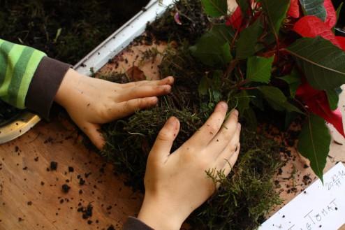 Fold mossen omkring rødderne
