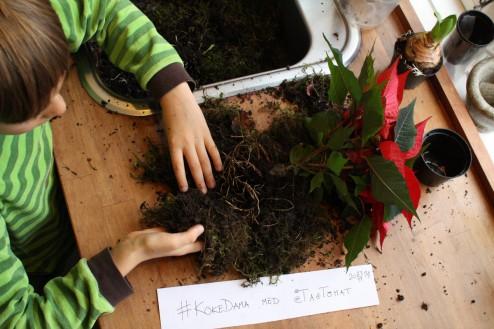 Læg planten på mostæppet