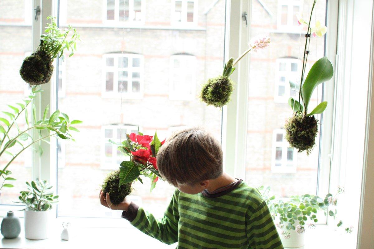 Kokedama - mosbolde - hængende plantekugler - kært barn har mange navne (jule-edition)