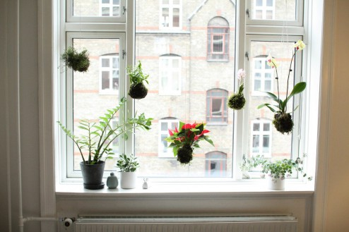 Dekorer dit vindue