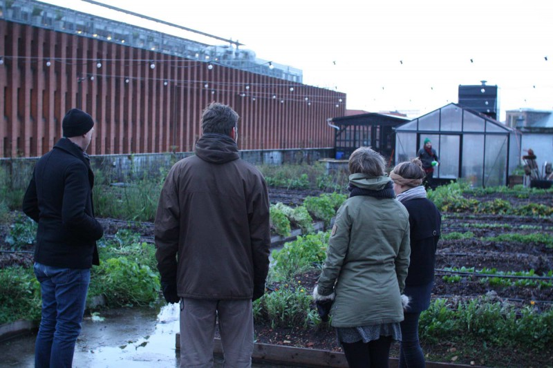 We visited the Rooftop Farm of Østergro, a cool project much related to Brooklyn Grange