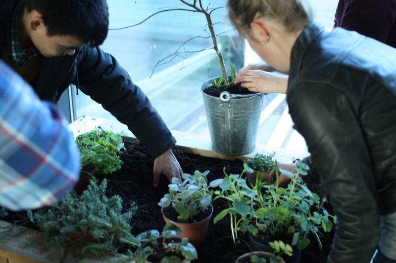 Højbedene plantes til med udvalgte krydderurter fra Grennesminde