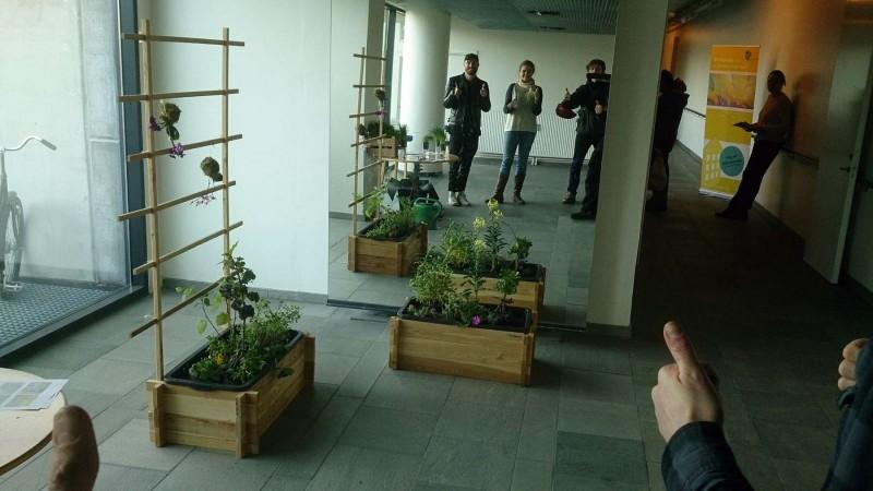 Selvvandende plantekasser kan skjules med lærke træ. Espalier til at binde tomatplanter op.