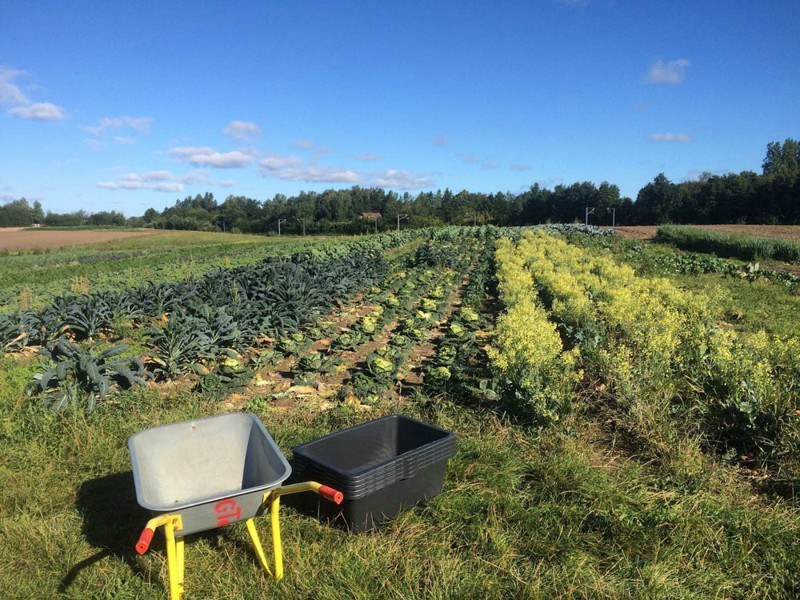 TagTomat buys and digs out some fully grown vegetables from Grantoftegaard just outside of Copenhagen.
