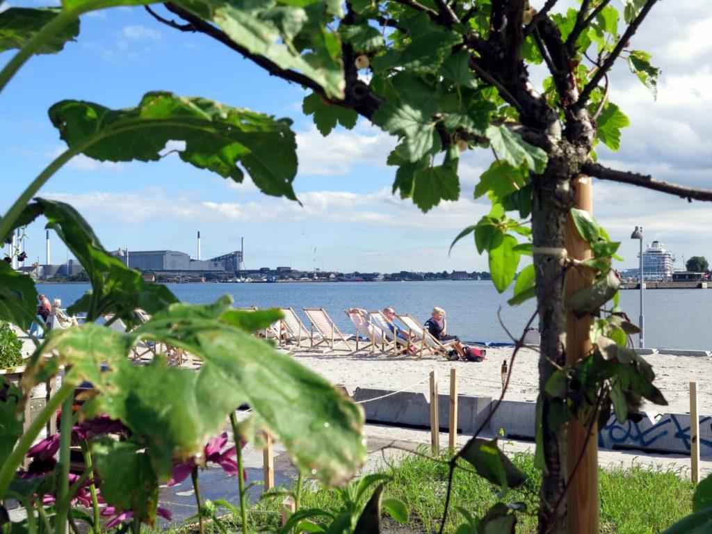 Redmolen i Nordhavnen – Blomster og fællesskab før byen bygges