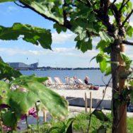 Redmolen i Nordhaven – Blomsterne kommer før byen – Strandbar i juli, august og september måned