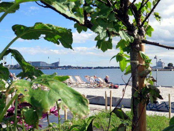 Redmolen i Nordhaven - Blomsterne kommer før byen - Strandbar i juli måned