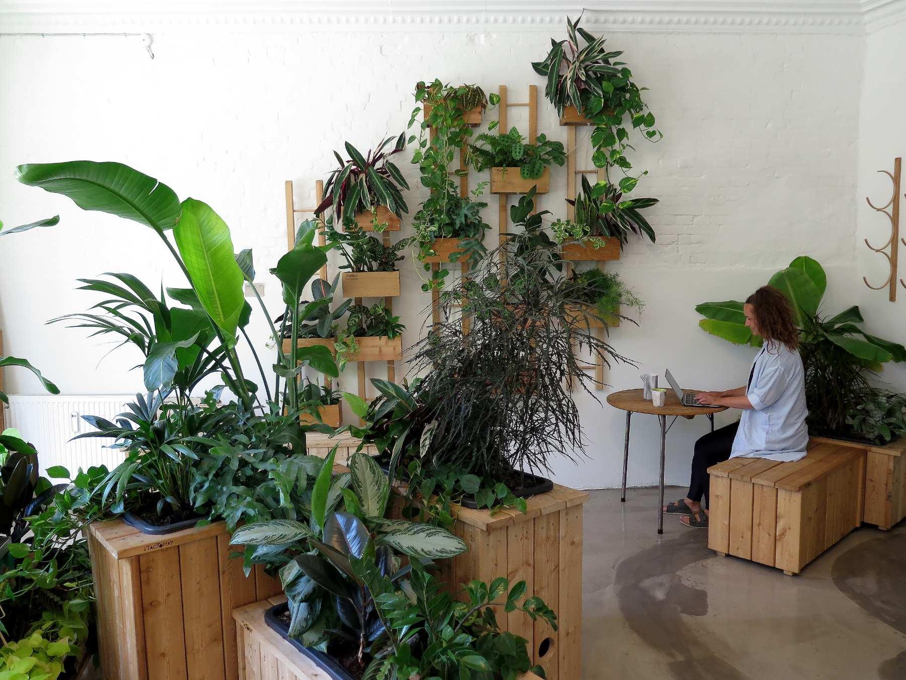 Plantevæg