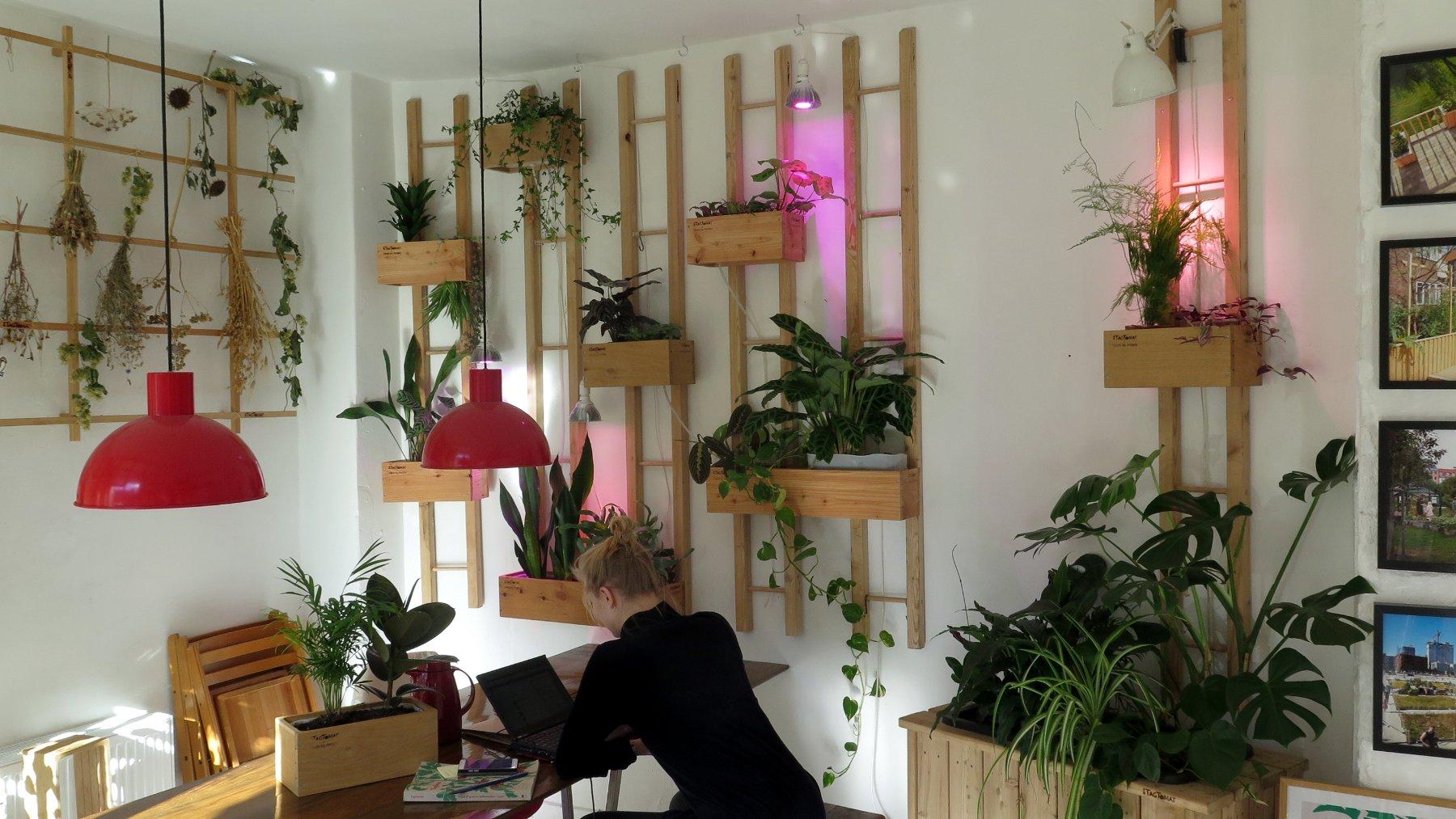 Plantekasse indendørs