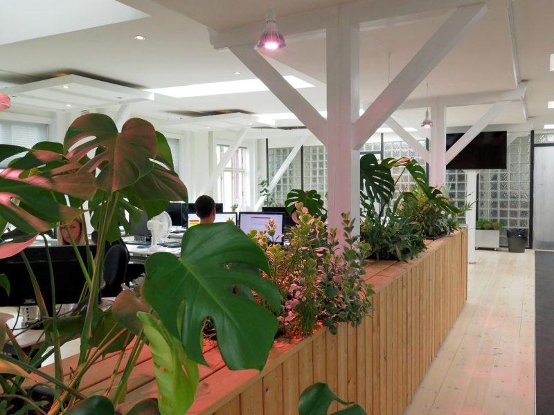 Luftrensende planter som rumdeler i kontormiljø. Selvvandende plantekasser og lærketræ.