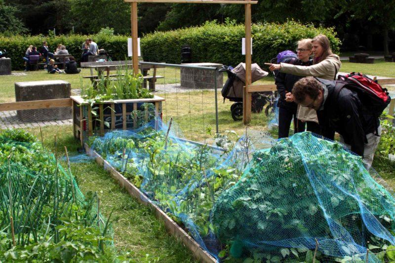 Urban gardening urbanhaven fælleshave