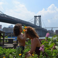 Community gardening – det spirer i New York