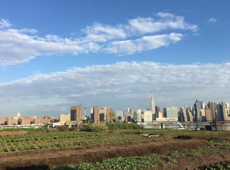 Kommerciel urban gardening med socialøkonomiske projekter. Eagle Street Rooftop Farm i Greenpoint.