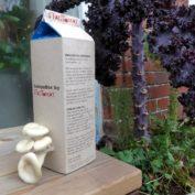 SvampeBox 1l - Østershatte klar til høst
