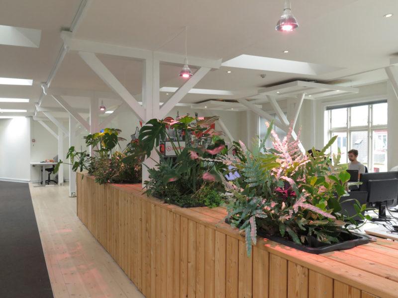 Rumdeler med kontorplanter