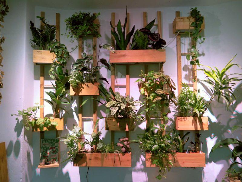Luftrensende kontorplaner i vores grønne plantevæg