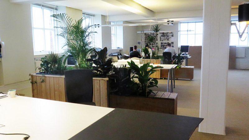 Kontorplanter som rumdeler med luftrensende planter