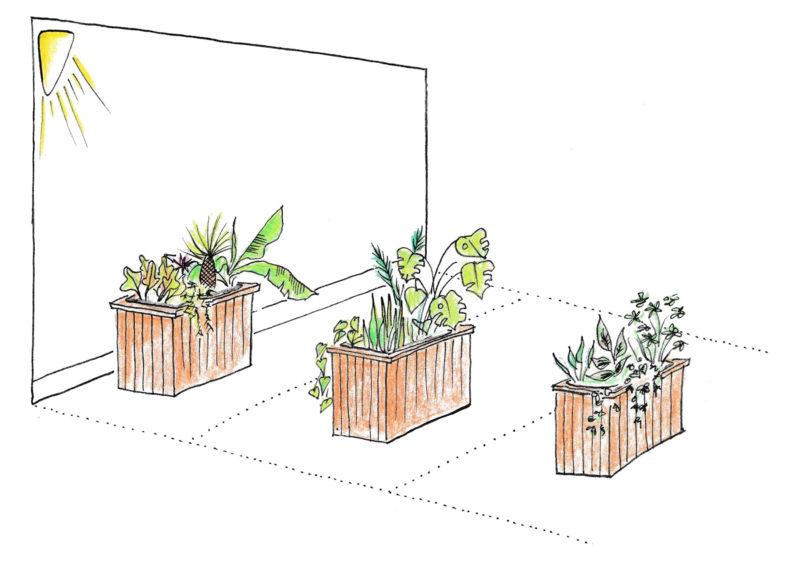 Planter kræver forskelligt lys, vi opdeler i zoner