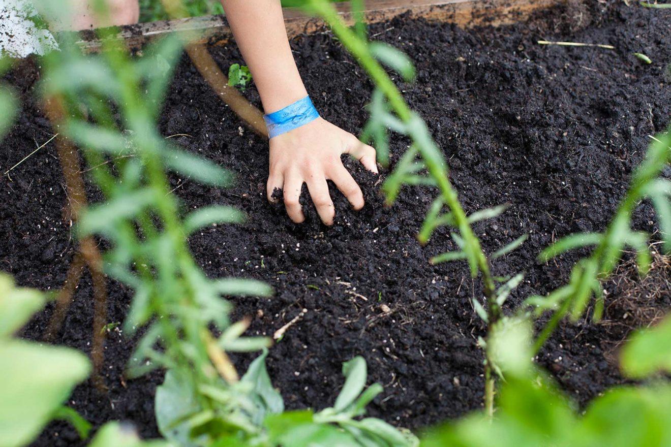 Dyrkning i byen –  køkkenhave og økologisk dyrkning på minimal plads