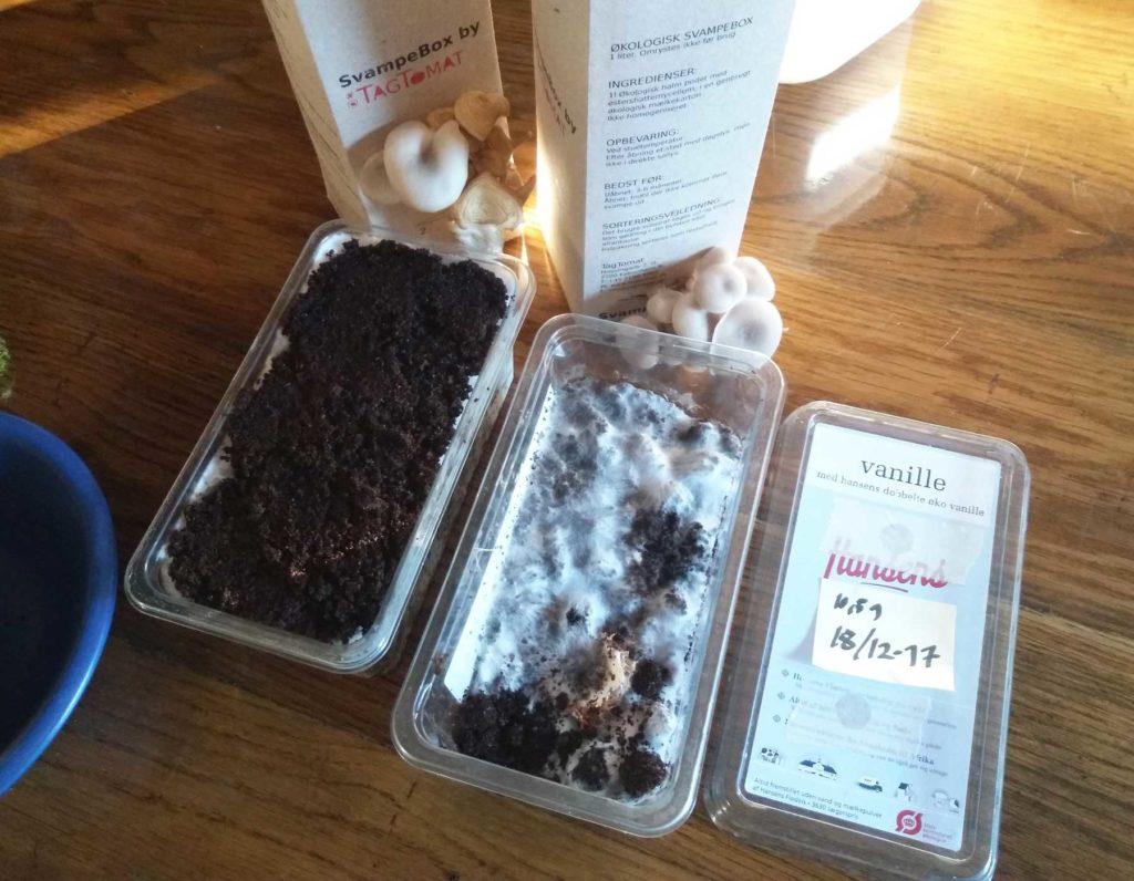 Pasningsguide til DIY-SvampeKit – dyrkning på kaffegrums