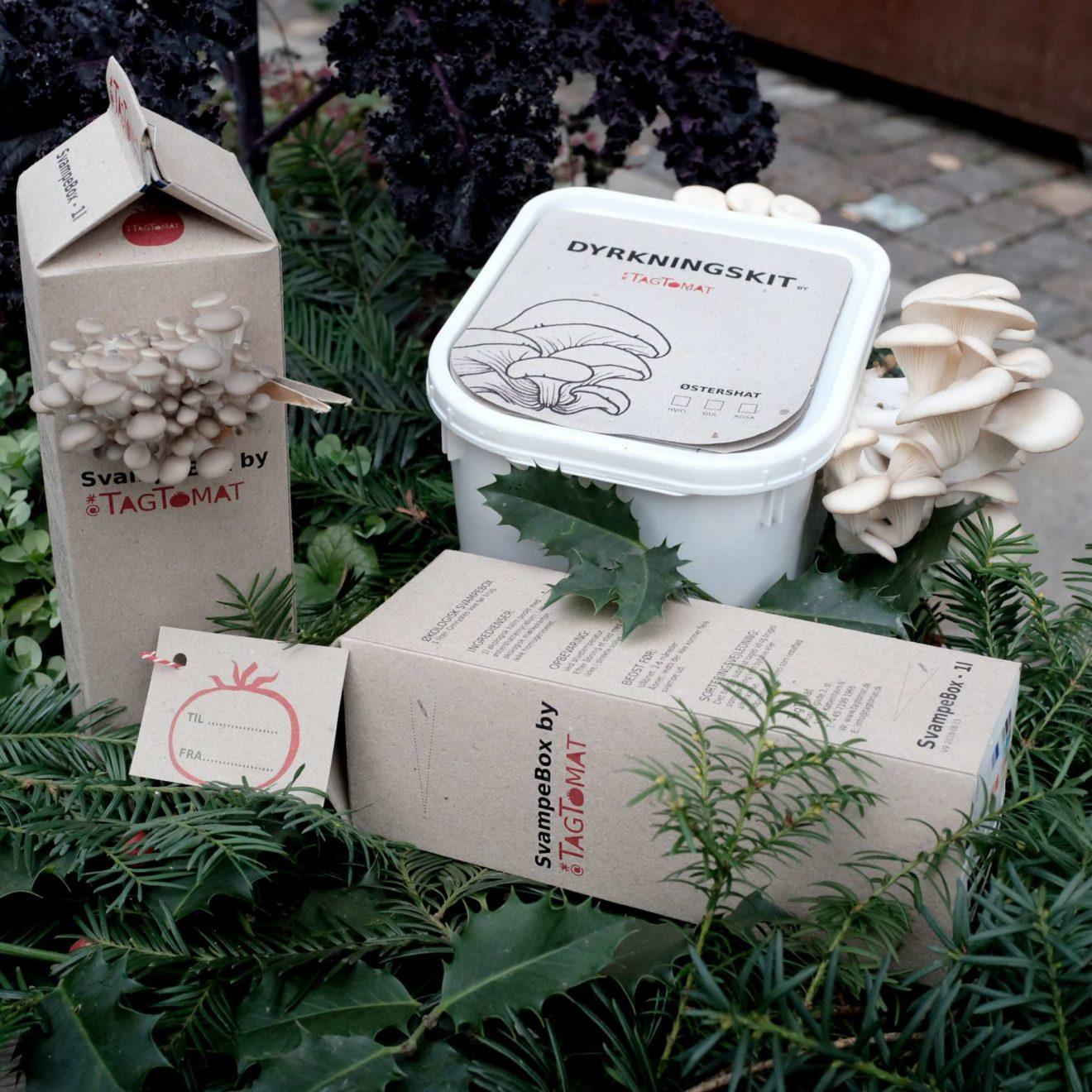 SvampeBox og Dyrkningskit med østershatte