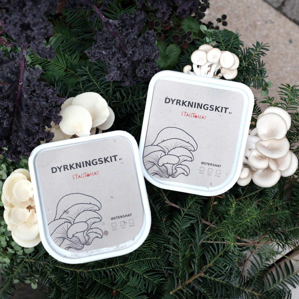 DyrkningsKit med østershatte – sådan gør du med halm