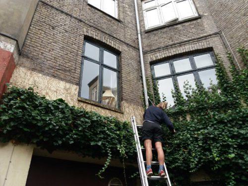 Jobopslag: Vi søger en grøn gartner til drift i byen (vikariat fra feb/marts 2019)