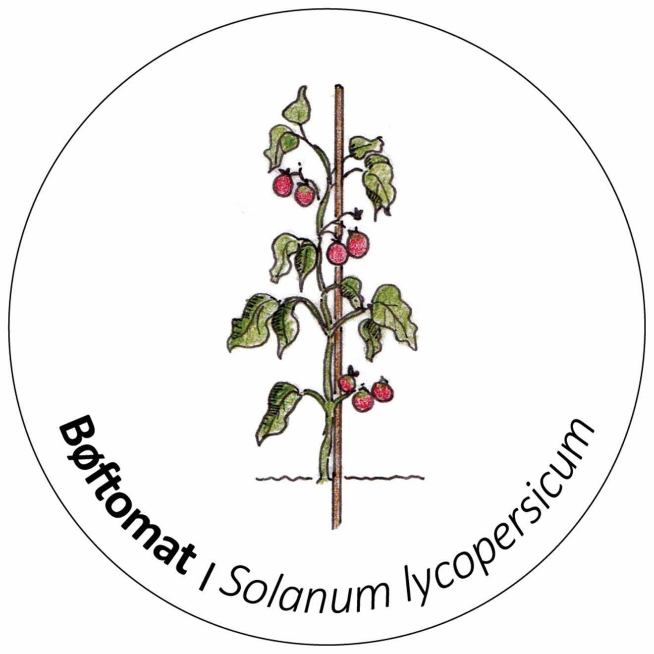 Bøftomat_Web