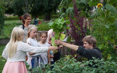 Urban Gardening: What is urban gardening?
