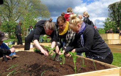 Greenbuilding – TagTomats take på Teambuilding