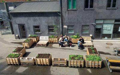 Skolehave med udskolingen – Rådmandsgades Skole