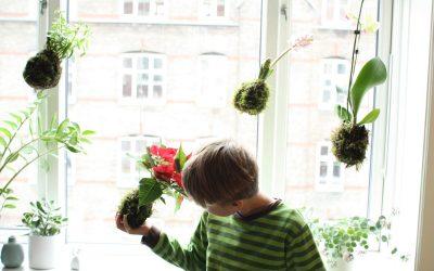 KokeDama – hængende haver til din vindueskarm