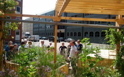 Kloning af tomater en succes, Fortovshaven er nu levedygtig og By-, Bolig- og Landdistriksministeriet kan lide hvad de ser :-)
