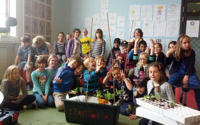 Udplantning af forspirrer på Nørrebro Park Skole