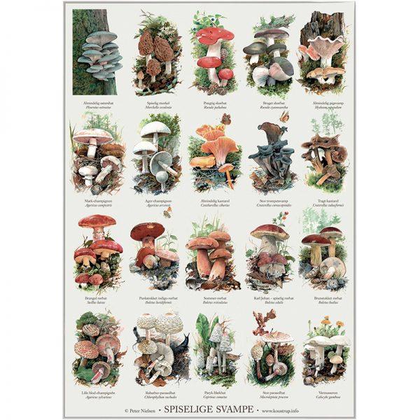 Spiselige svampe - Plakat (A2)