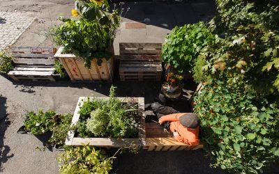 Parkeringshaver skaber fællesskaber i byens rum