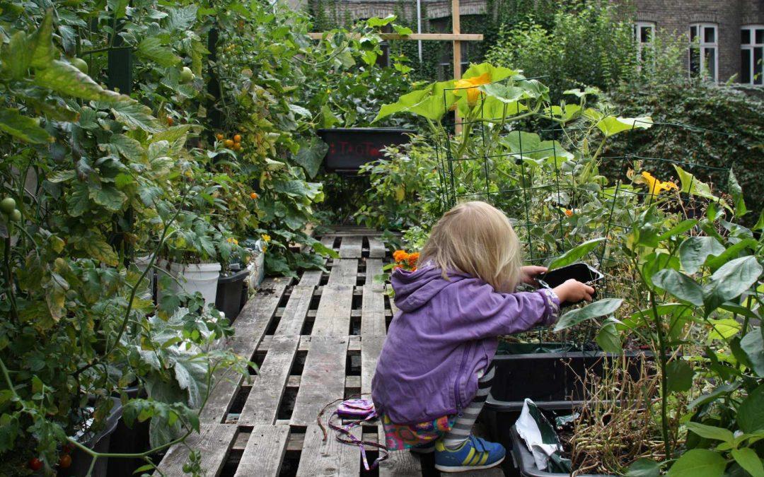 Dyrk grønt i din vindueskarm, din altan og i jeres baggård – Mads Boserup Lauritsen
