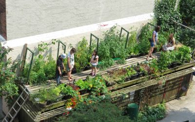 Nyhedsbrev 2020-03-13 | BogTomat V2 er skudt i gang | Gode planteråd til din altan | Inspiration til dyrkning | Dyrk Mikrogrønt i metermål