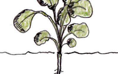 Opgave 1.5: Plantecellen og plantens dele