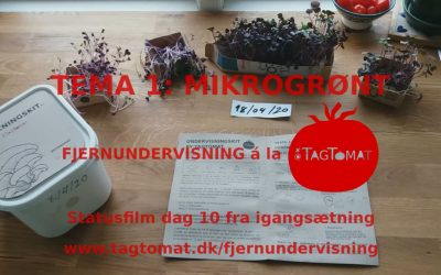 Fjernundervisning Tema 1 – Mikrogrønt – Statusvideo dag 10